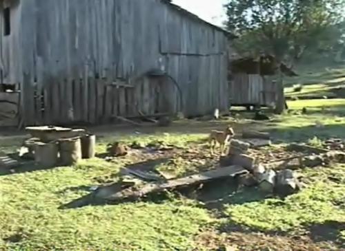 Preso suspeito de matar homem a pauladas em Caçador