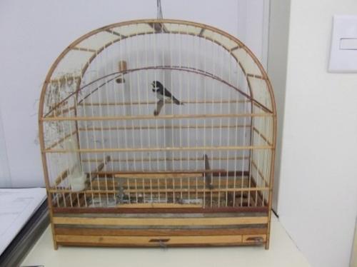 Pássaro roubado está avaliado em pelo menos R$ 1,5 mil