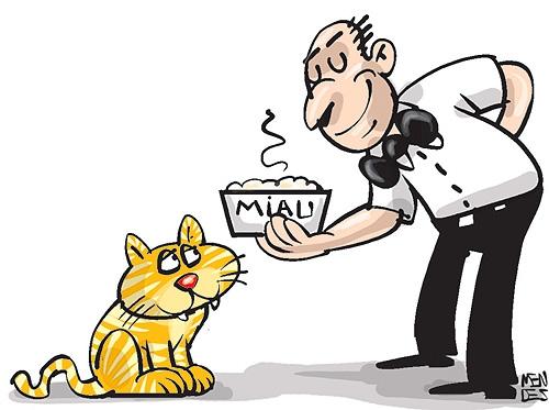 Voce Acha Que Seu Gato Tem O Apetite Caprichoso Entenda Os