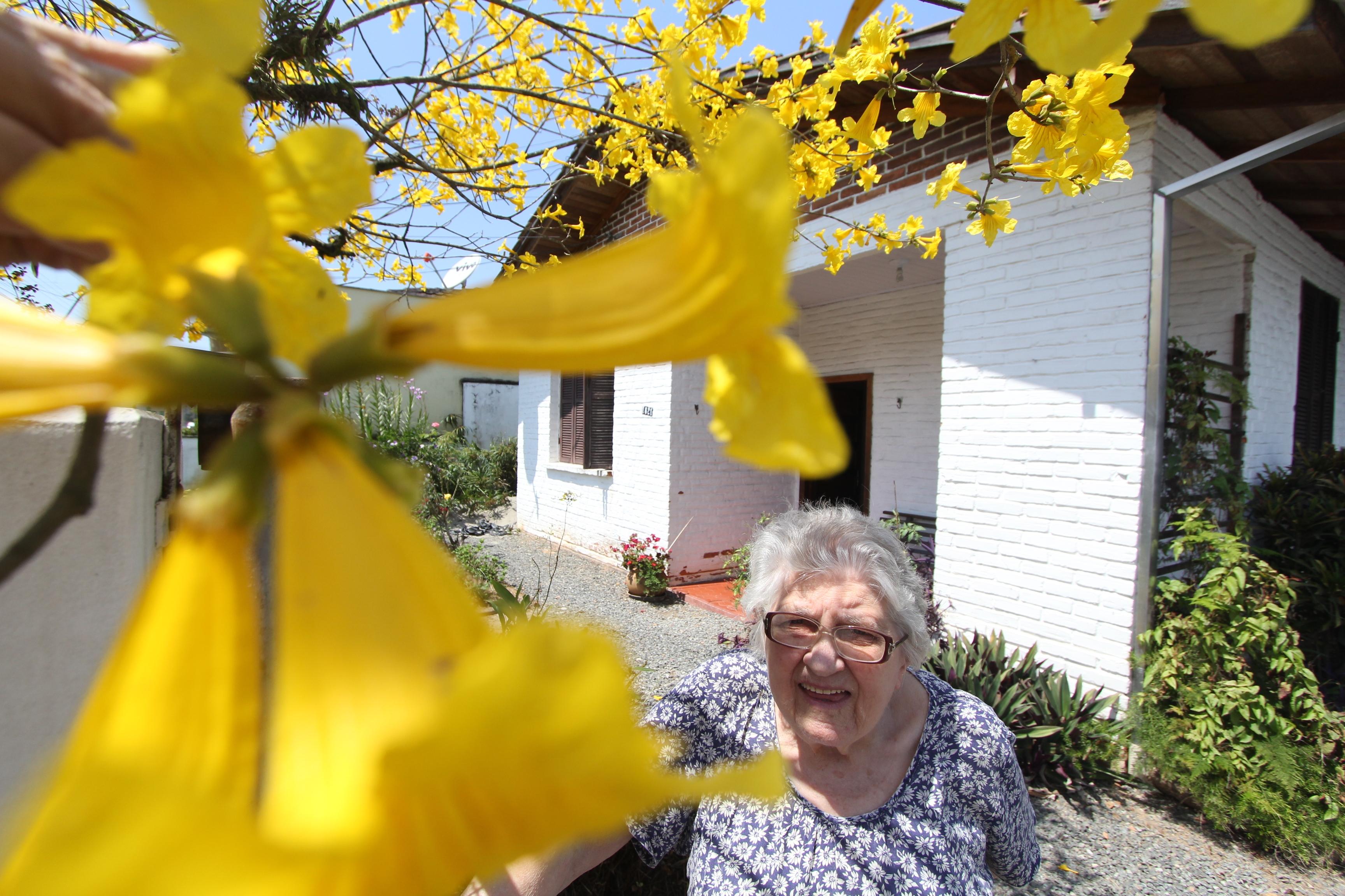 Aposentada tem orgulho da árvore que dá ainda mais cor ao seu jardim - Fabrício Porto/ND