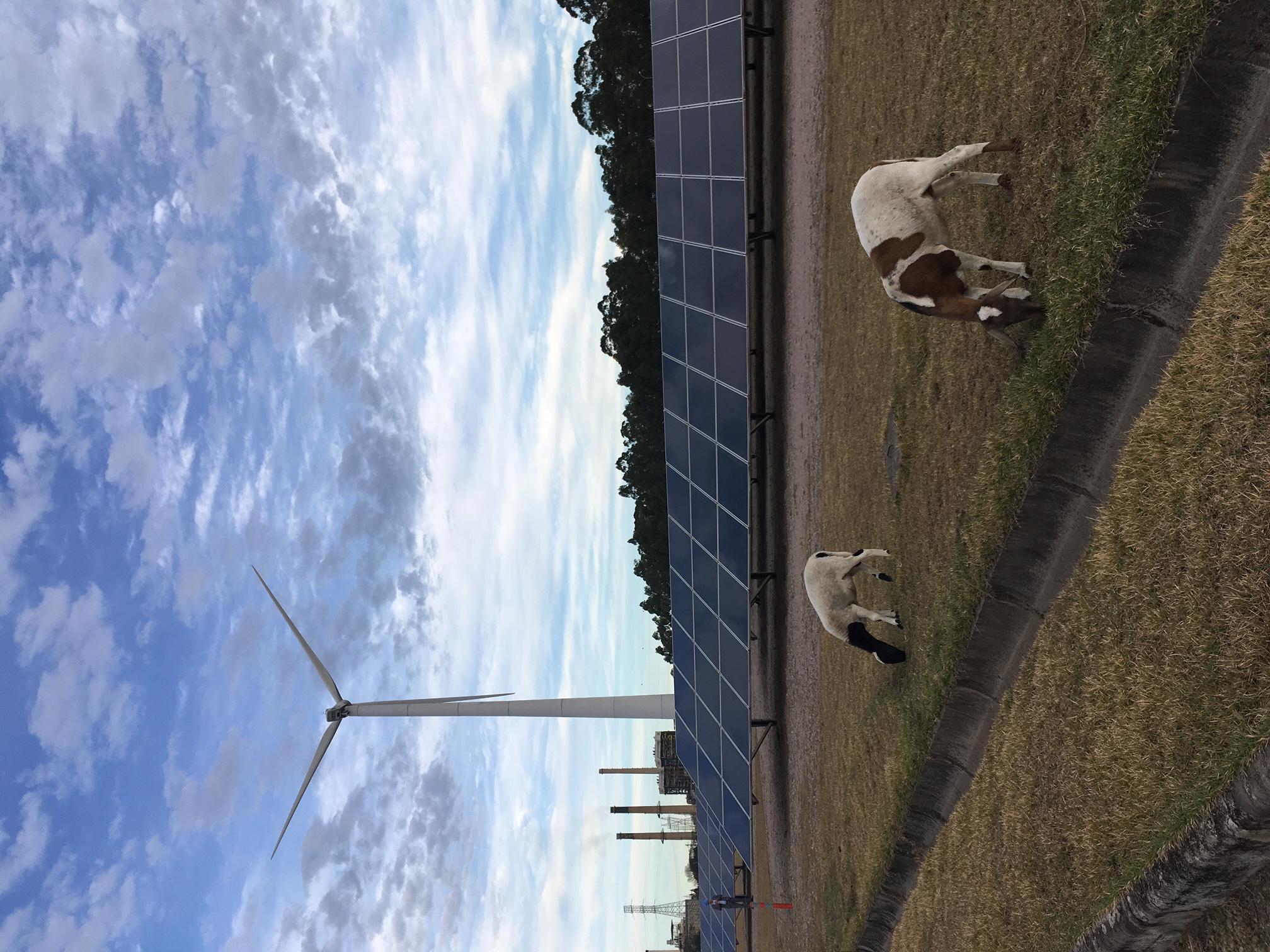 A Engie Brasil Energia investe em projetos de P&D (Pesquisa e Desenvolvimento) de energia solar e eólica – Foto: Duda Hamilton/Divulgação/ND