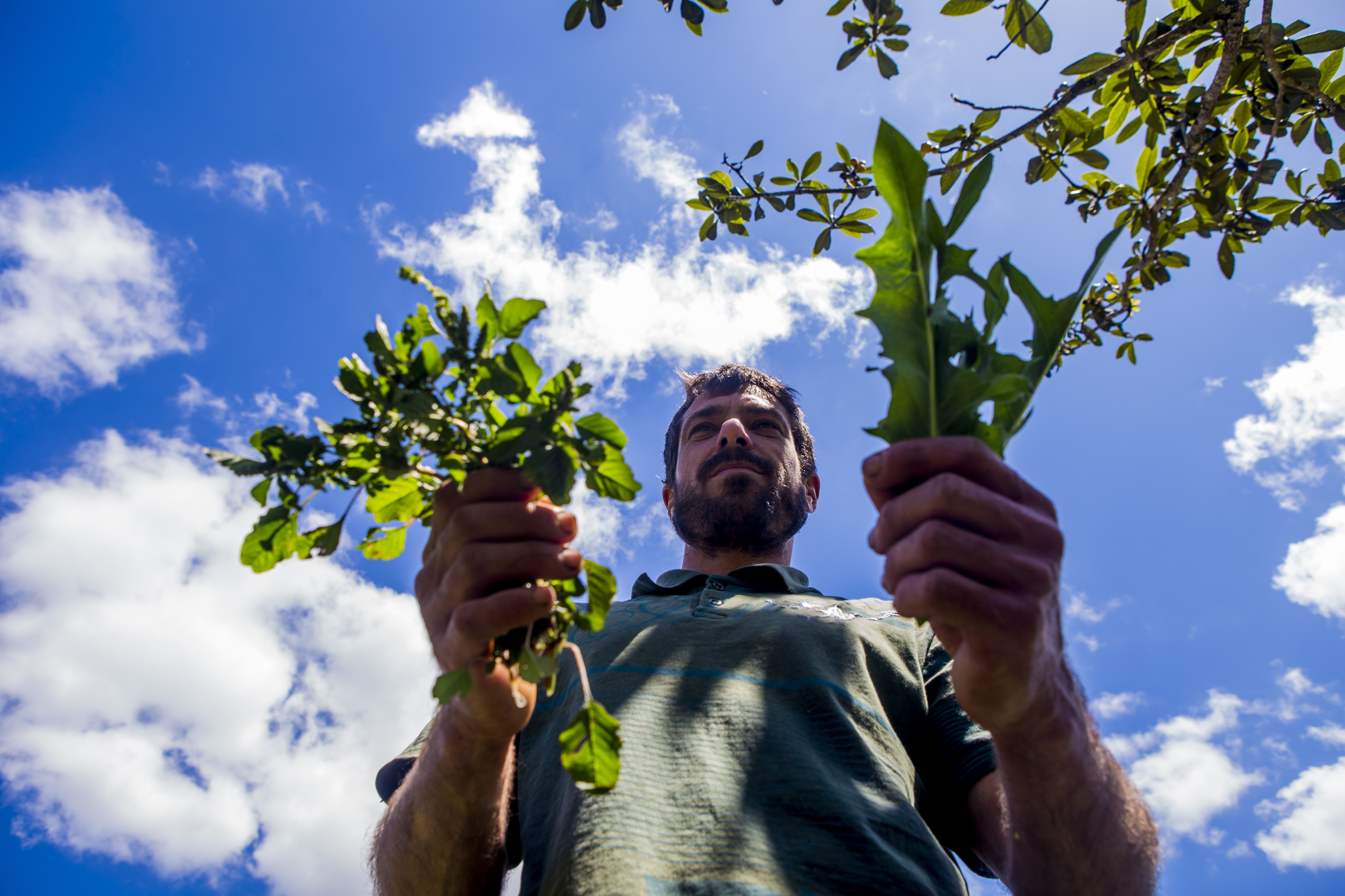 Saborosa em saladas, a beldroega é importante fornecedor de ômega três, ensina o produtor e engenheiro agrônomo Pedro Faria Gonçalves - Flávio Tin/ND