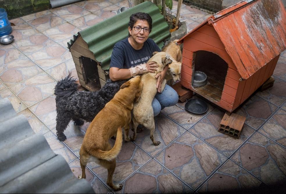 Rosa Villanueva e o marido cuidam de 30 cães, dois gatos e uma pomba de asa quebrada - Flátio Tin/ND