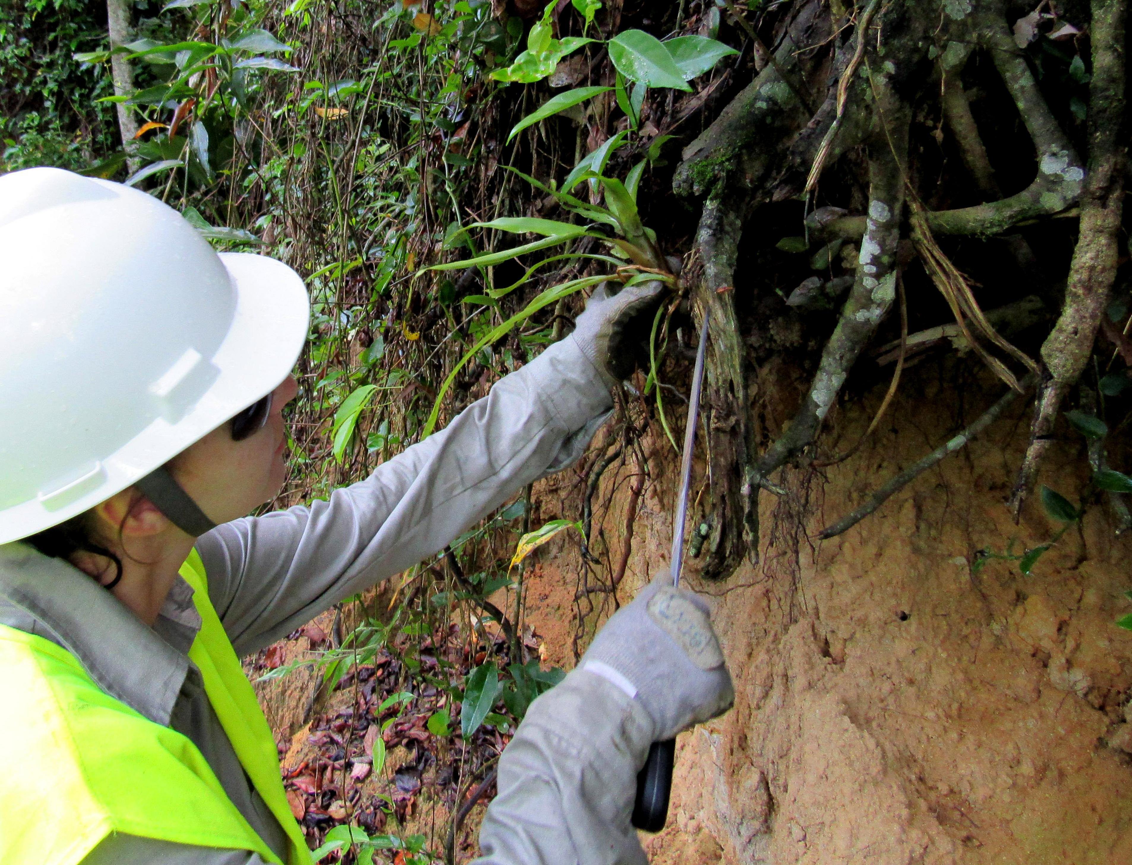 Bromélias são retiradas da área onde vai passar a estrada - Divulgação/ND