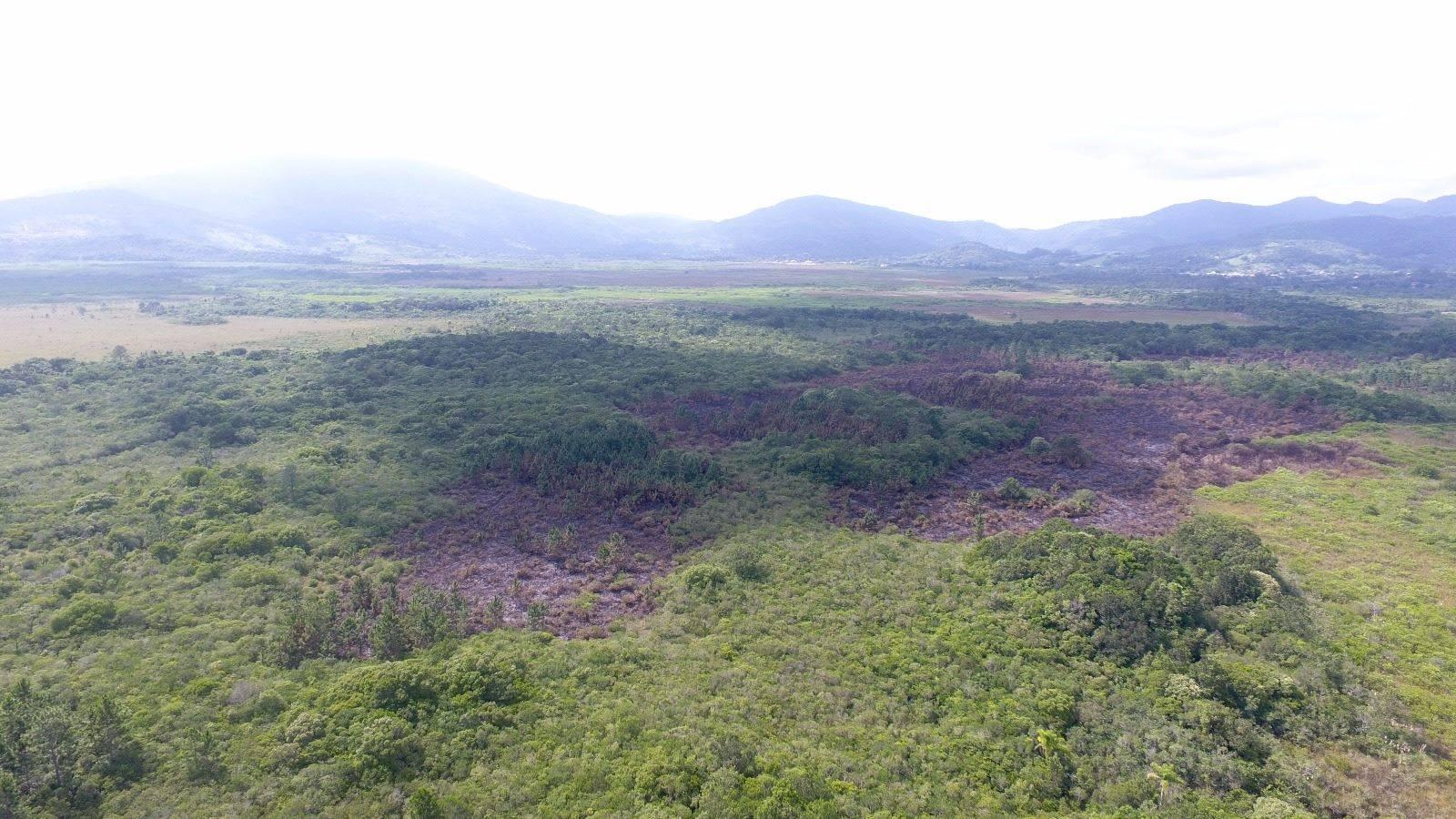 Incêndio foi registrado na semana passada em 11 hectares da área total de 217 hectares - Divulgação/ND