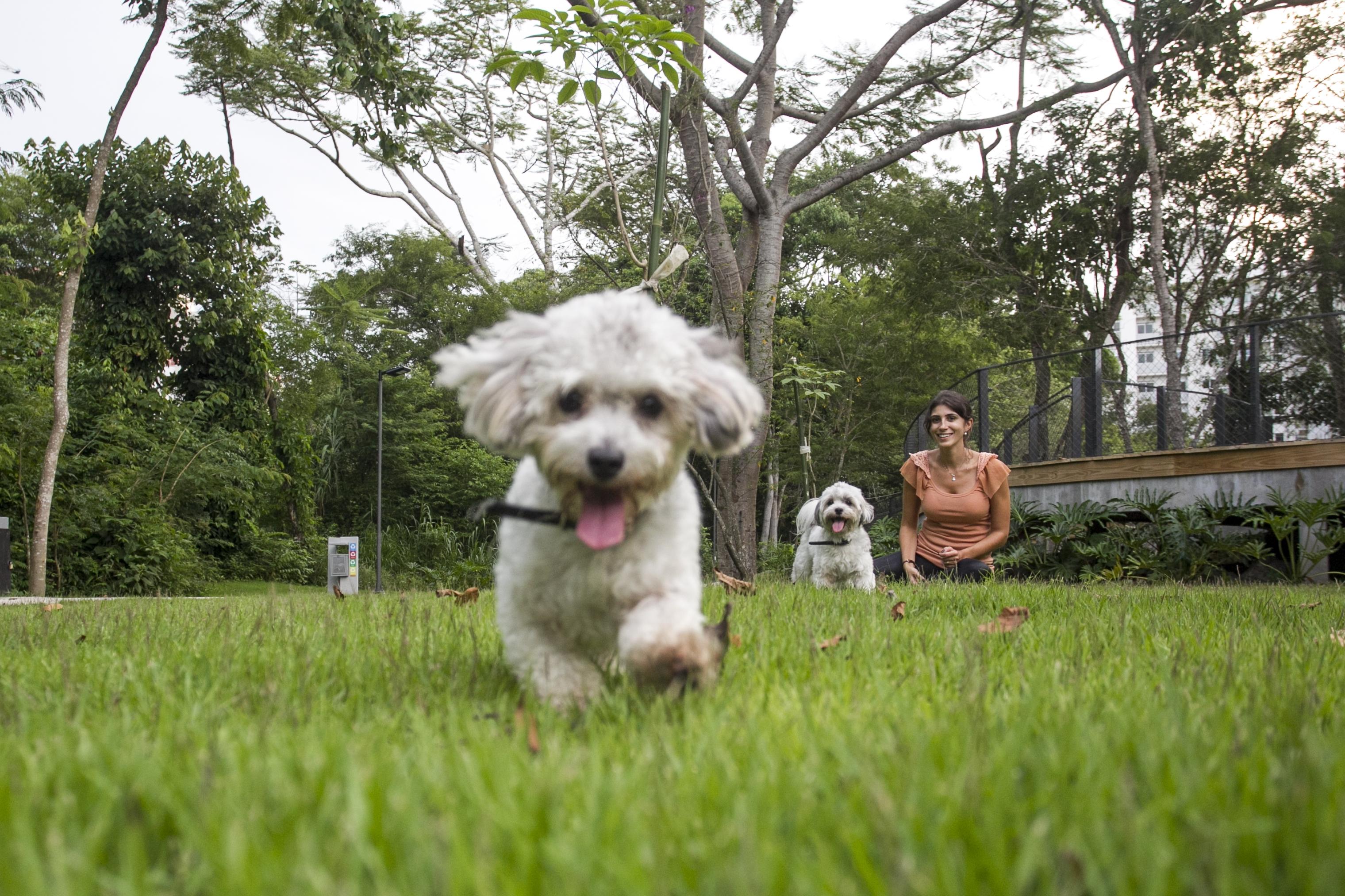 Laíse Orsi leva diariamente as cachorrinhas Luna e Lupita para passear no Parque Linear do Córrego Grande - Marco Santiago/ND