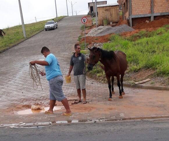 Animais foram recolhidos depois do acidente no bairro Potecas - Divulgação/ND
