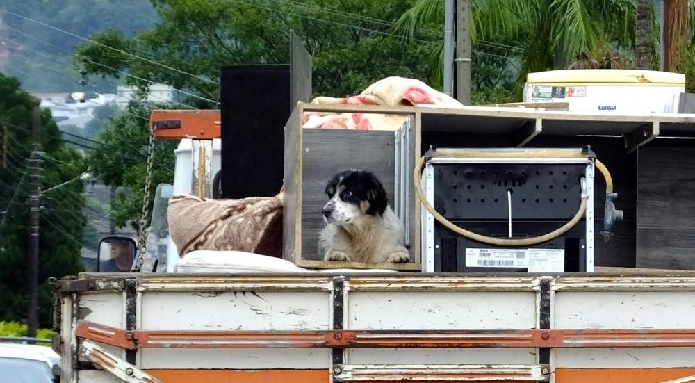 Em Rio do Sul, a prefeitura está pedindo para que os moradores levem seus animais para o abrigo - Xico Stocker/Prefeitura de Rio do Sul/Divulgação/ND