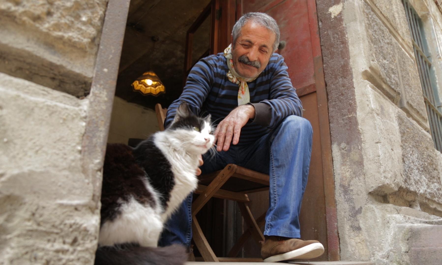 Os gatos tem uma reputação sagrada na Turquia - Divulgação/ND