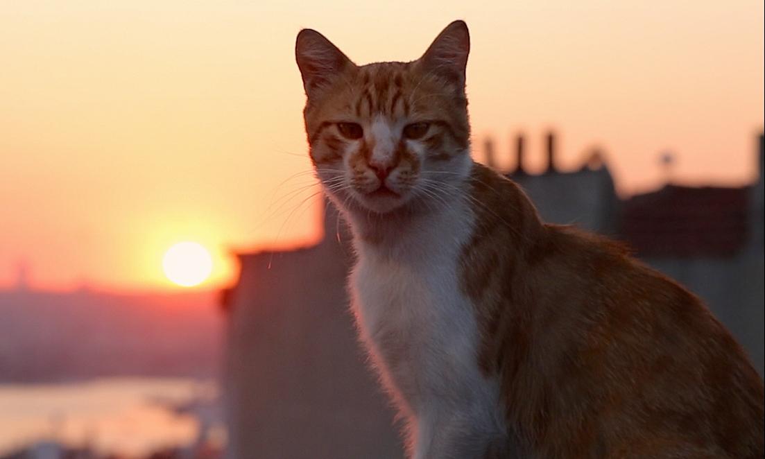 Os gatos de rua vivem aos milhares em Istambul - Divulgação/ND