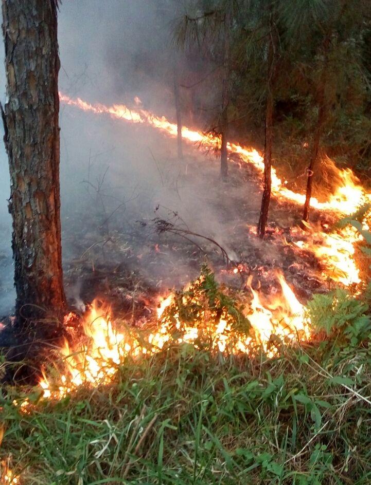 Por volta das 17h, ainda havia focos de incêndio no parque - PMA/Divulgação/ND
