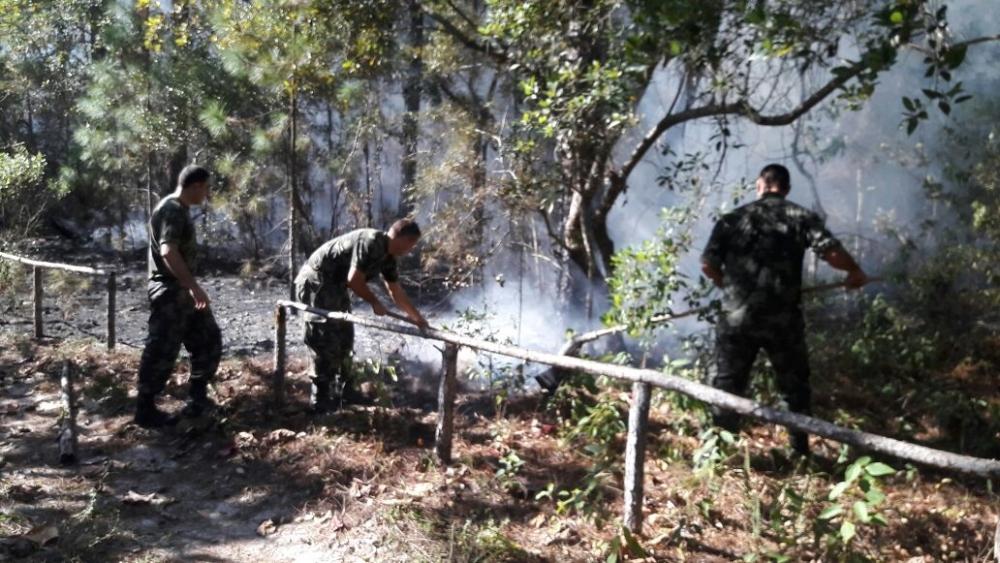 Combate às chamas foi concluído na tarde desta quinta-feira - Polícia Militar Ambiental/Divulgação/ND