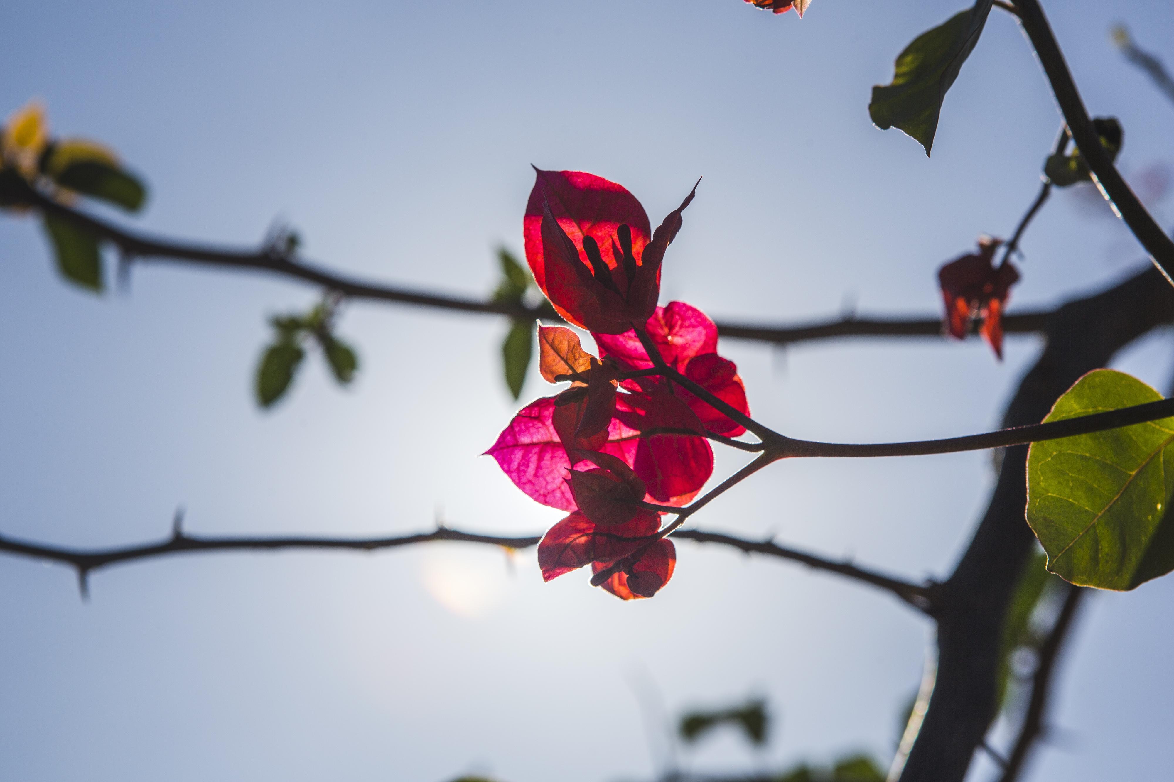 O começo da primavera deve ser quente e seco em Santa Catarina - Daniel Queiroz/ND