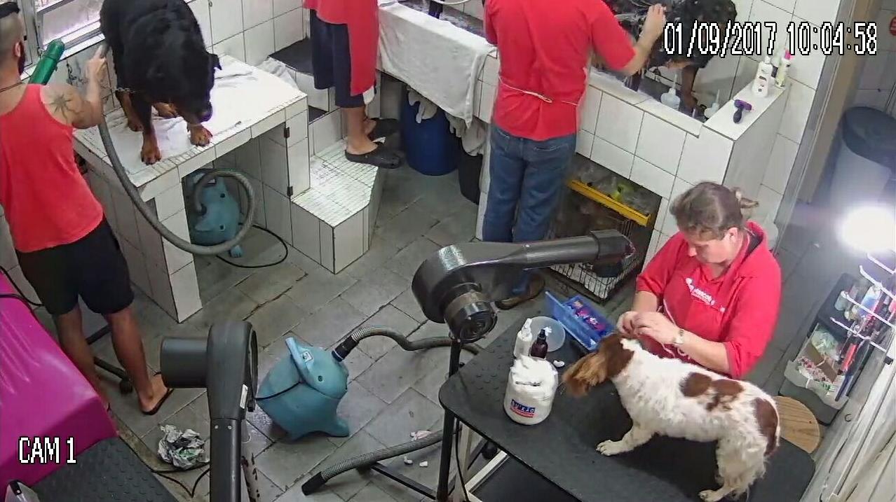 Clínica Mascote e Cia instalou o sistema em que os clientes conseguem acompanhar o trabalho da equipe de banho e tosa - Reprodução