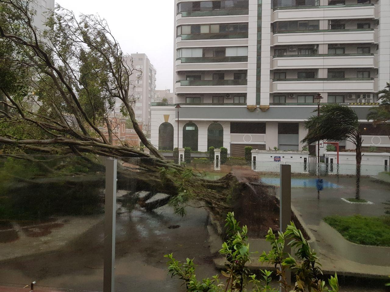 Figueira havia sido plantada por uma moradora da região - Bruno Volpato/Divulgação/ND