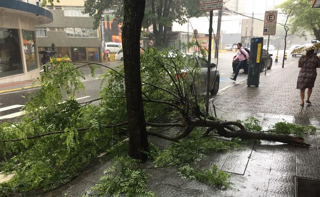 Galho caiu sobre a rua na avenida Osmar Cunha, no Centro de Florianópolis - PMF/Divulgação