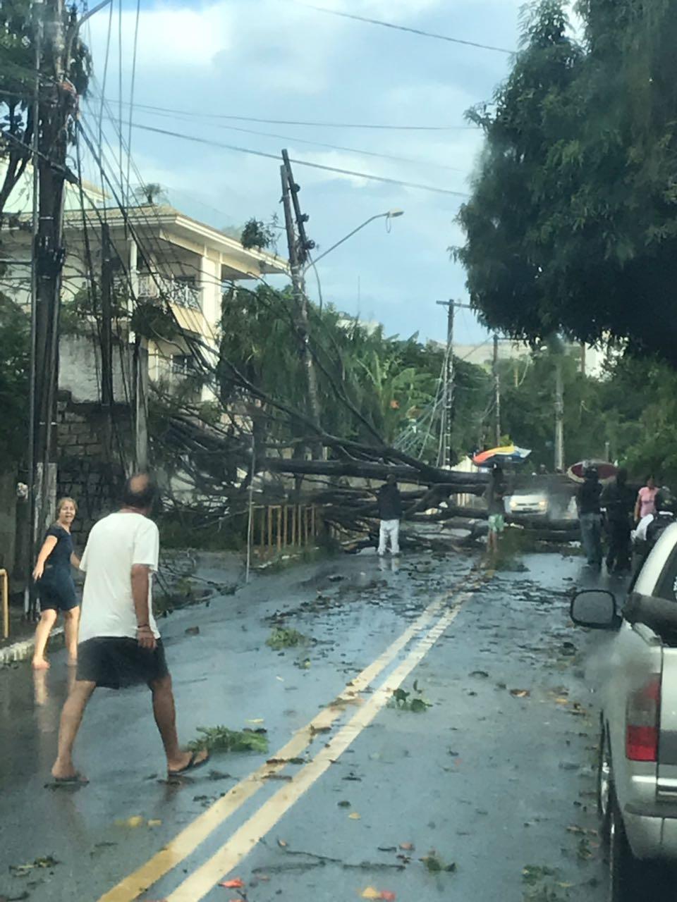 Árvore interrompeu o trânsito na rodovia Tertuliano Brito Xavier na tarde desta quarta - CBMSC/Divulgação/ND