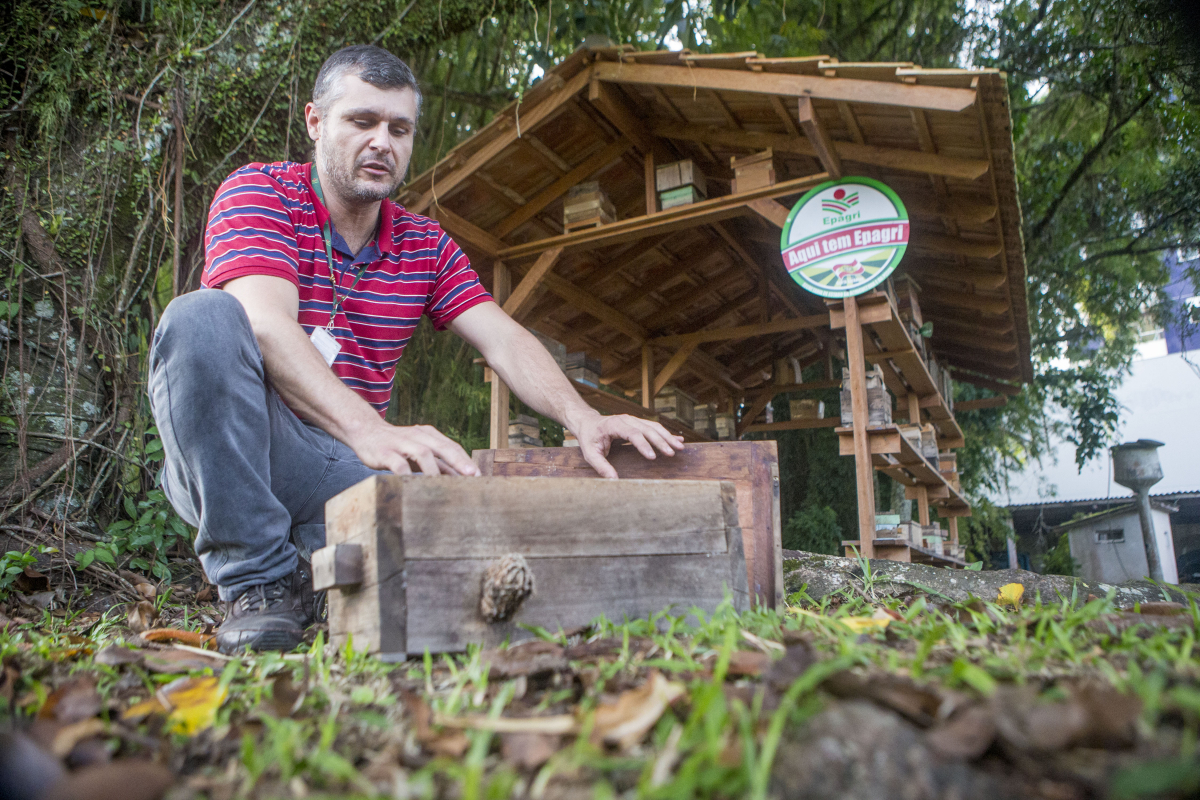 Na sede da Epagri, em Florianópolis, segundo o agrônomo Rodrigo Durieux Cunha, as pessoas podem aprender sobre o manejo das abelhas - Flávio Tin/ND