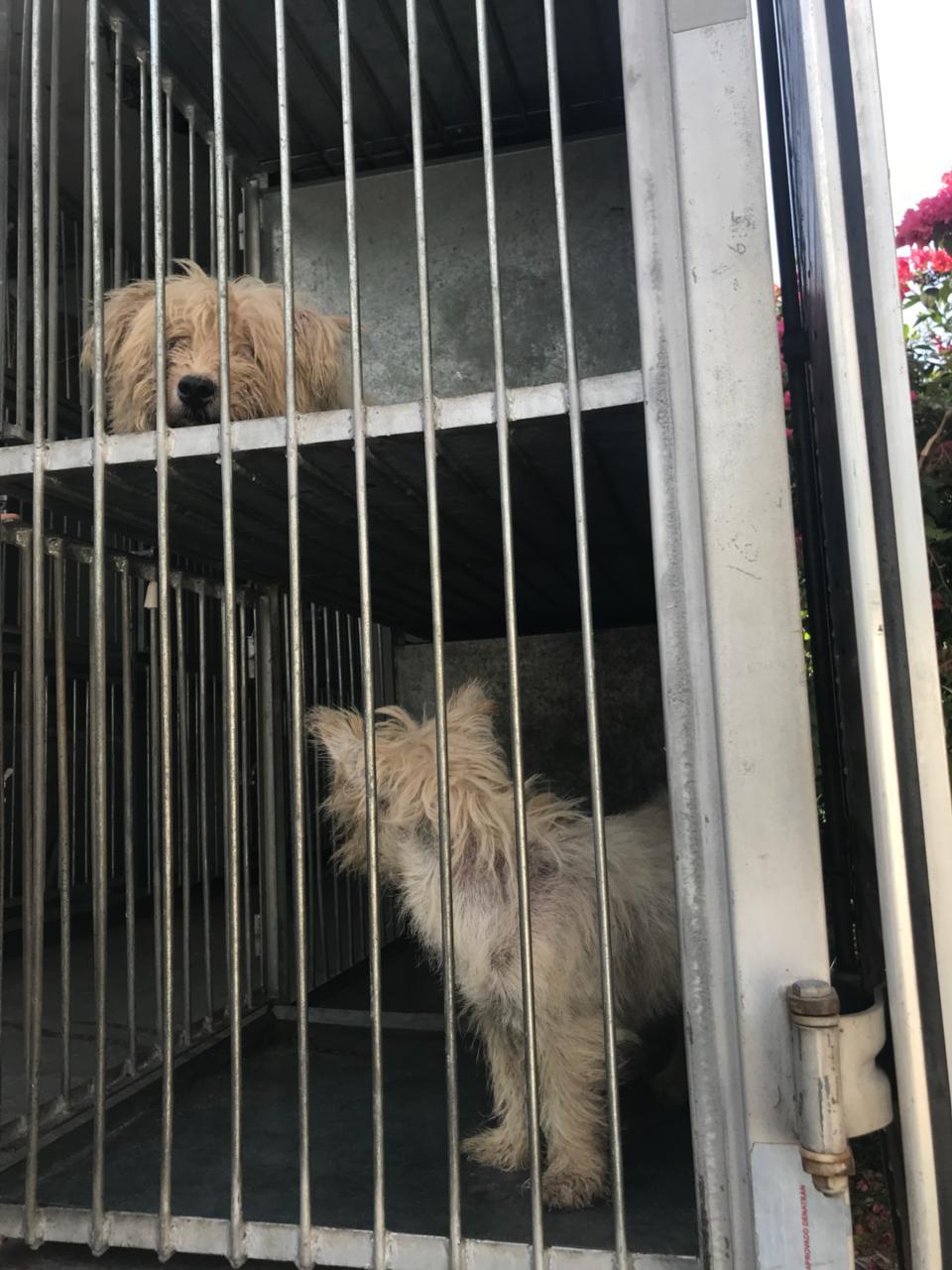 Cinco cães eram mantidos em condições insalubres - Kátia Chubaci/Divulgação