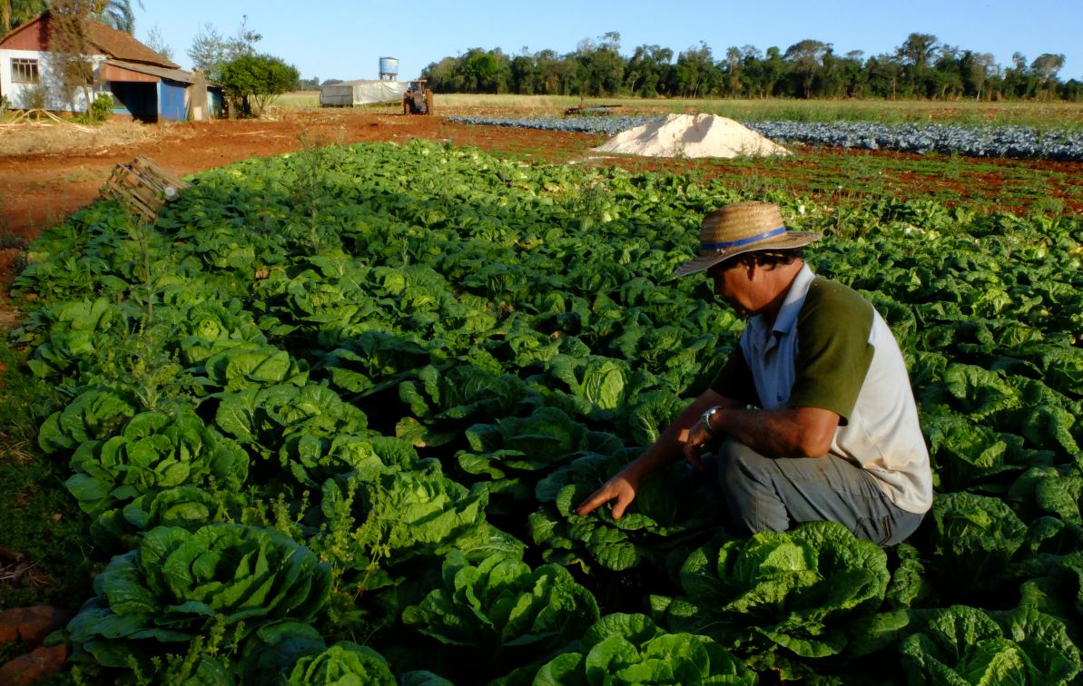 Com a MP, apenas pequenos agricultores do Pronaf do Norte e Nordeste terão direito a refinanciar dívidas - Antonio Costa/Fotos Públicas/Divulgação/ND
