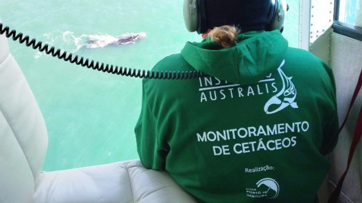 SCPar Porto de Imbituba realiza o monitoramento aéreo e terrestre das baleias-franca - SCPar Porto de Imibutuba/Divulgação/ND