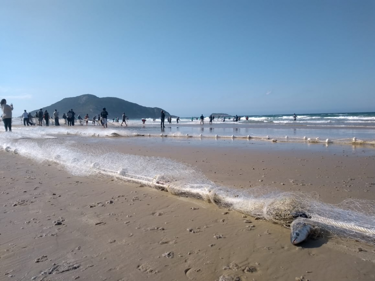 Captura de tainha na Praia do Santinho - Divulgação/ND