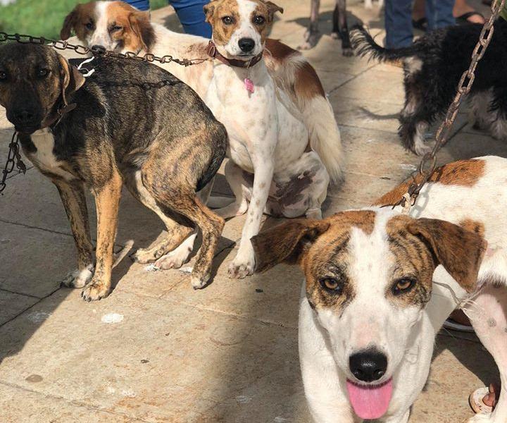 Mutirão internacional de castração atendeu cerca de 3 mil animais, no México - Divulgação/ND