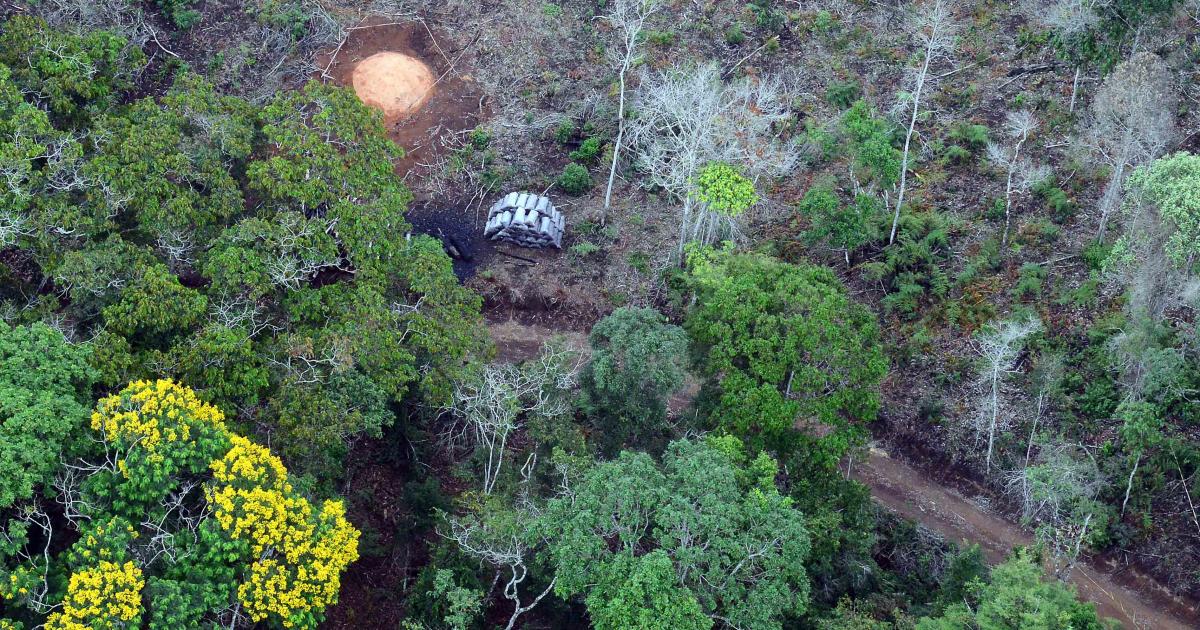 Minas Gerais promove operação para coibir desmatamento ilegal em área de Mata Atlântica, em 2014 - Wellington Pedro/Imprensa MG/Divulgação