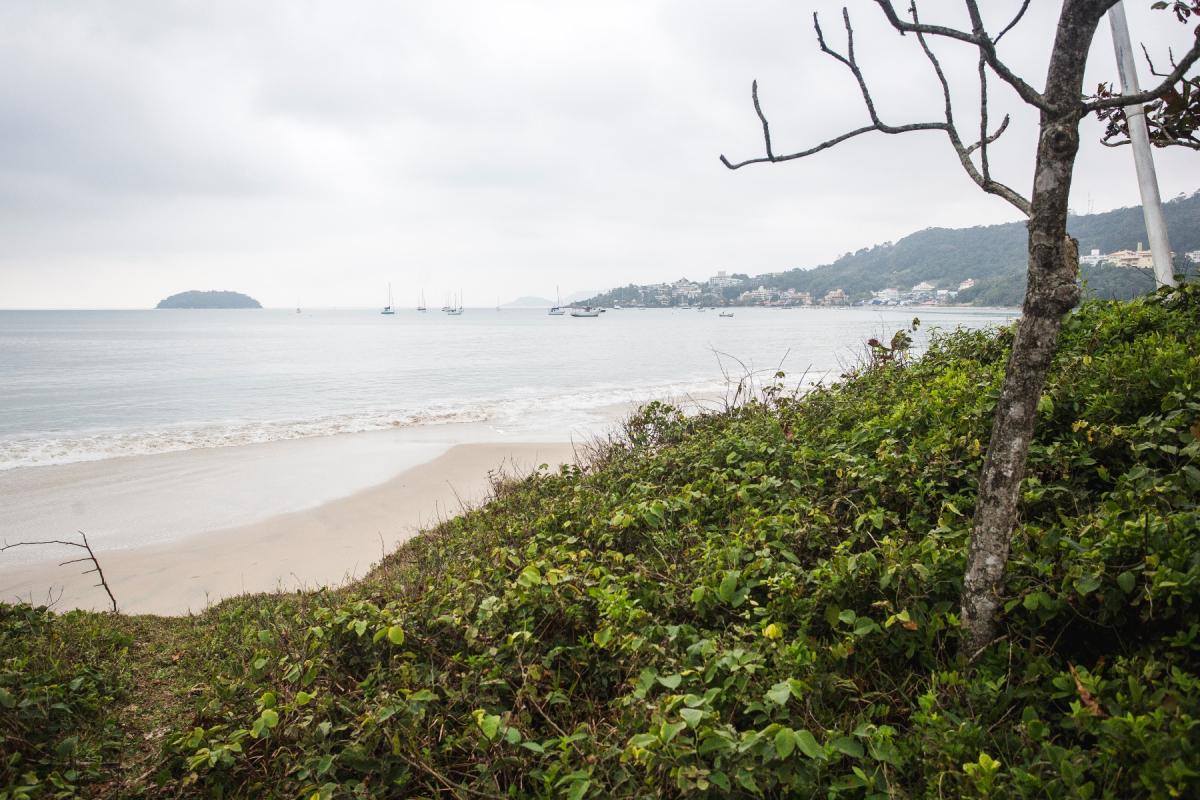 Mesmo com decisão do Tribunal de Justiça de Santa Catarina, vegetação de restinga continuará protegida como determina o Código Florestal - Daniel Queiroz/ND