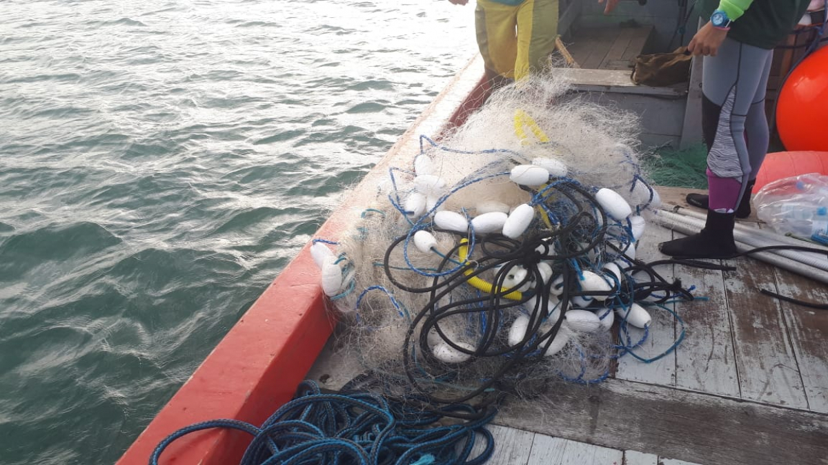 Rede que estava presa na baleia-franca - R3 Animal/Divulgação/ND