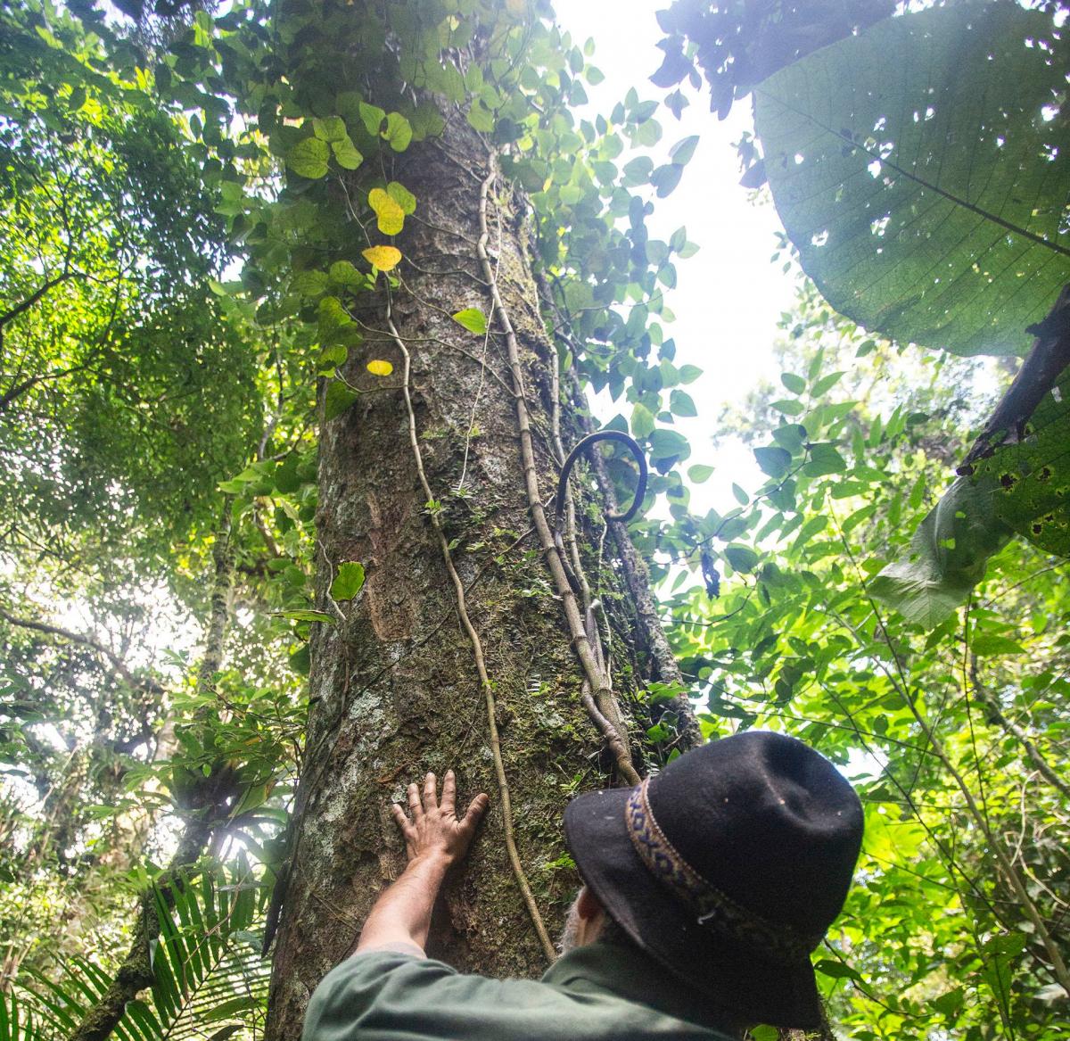 Canela-preta com mais de 400 anos de vida ganhou o apelido de Dias Velho - Daniel Queiroz/ND