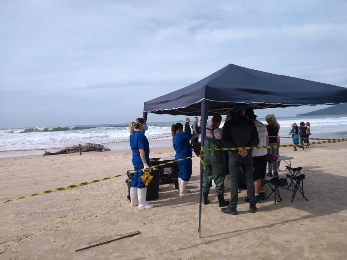 Equipe fará a necropsia do animal no local para tentar identificar qual a causa da morte - Emanuel Ferreira/R3Animal