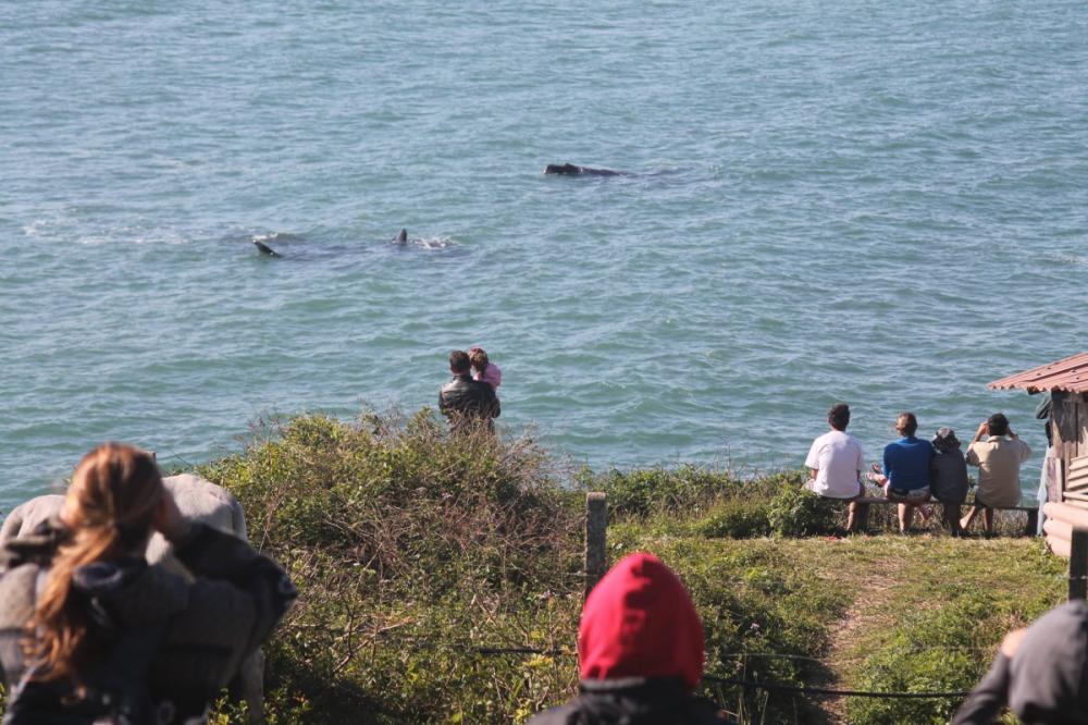 Roteiro no Sul do Estado valoriza culturas tradicionais locais durante a observação das baleias - Tob Terra/Divulgação