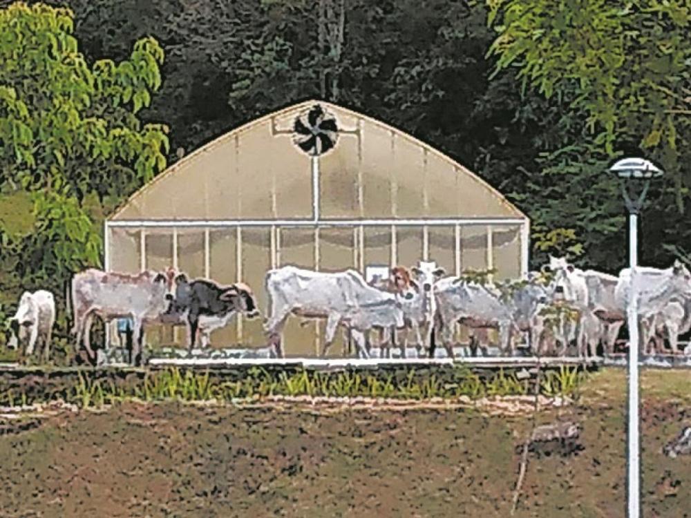 Cerca de 25 animais invadiram terreno do Jardim Botânico - Reprodução/G5/ND