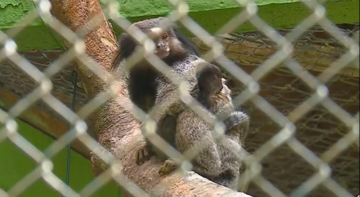 Um macaco sagui foi encontrado morto na região - RIC TV Record/Divulgação/ND