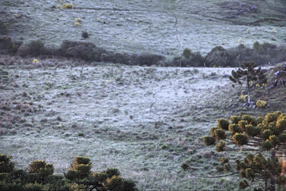 O Vale do Caminhos da Neve amanheceu com a paisagem esbranquiçada em pleno novembro - Mycchel Legnaghi/Divulgação/ND