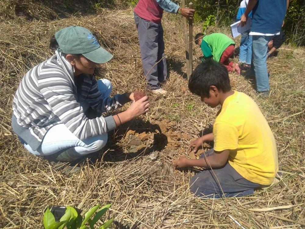 Indígenas trabalham na recuperação da mata com plantio de árvores nativas - Divulgação/ND