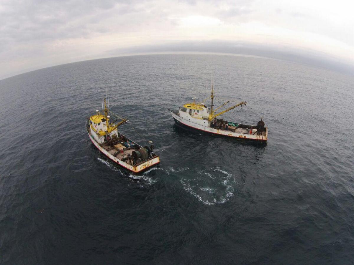 Barcos industriais capturaram mais que o dobro de tainhas do que o liberado - João Jose Francisco/Divulgação/ND