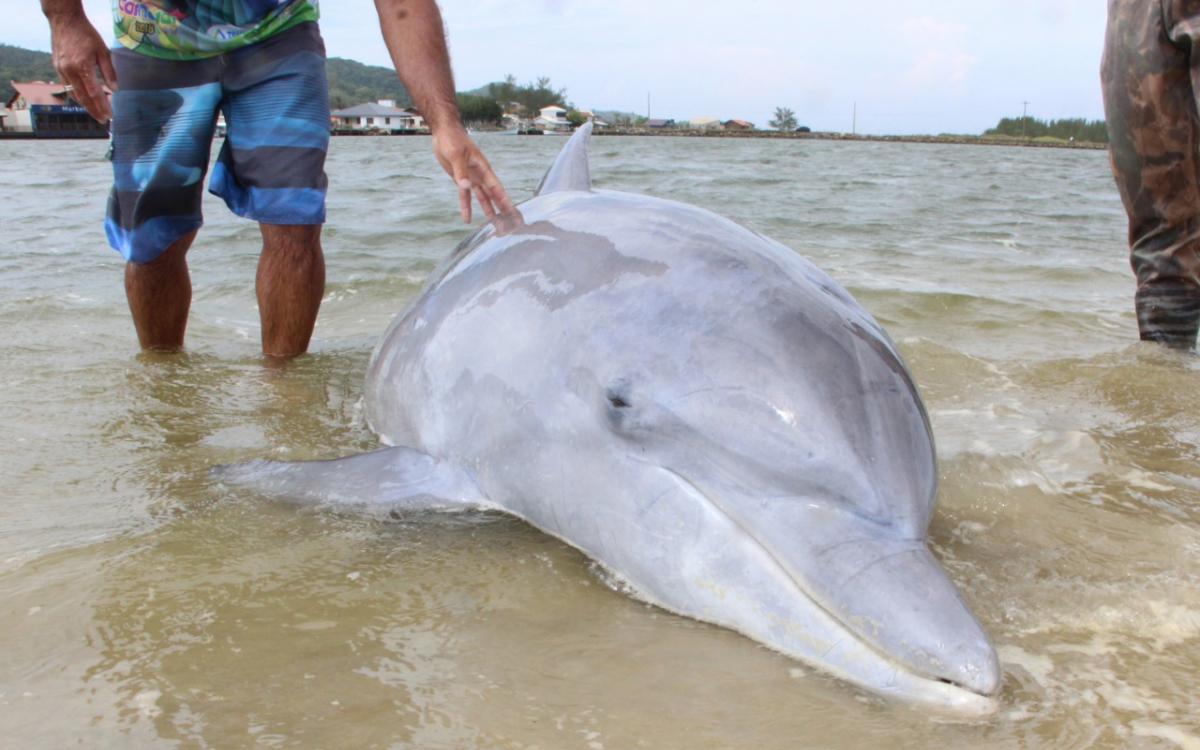 Boto foi encontrado morto em Laguna na manhã deste sábado - Elvis Palma/Divulgação/ND