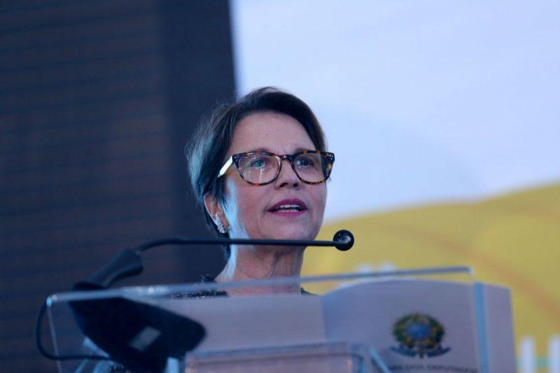 Ministra da Agricultura Tereza Cristina – Foto: Wilson Dias/Agência Brasil/Divulgação/ND