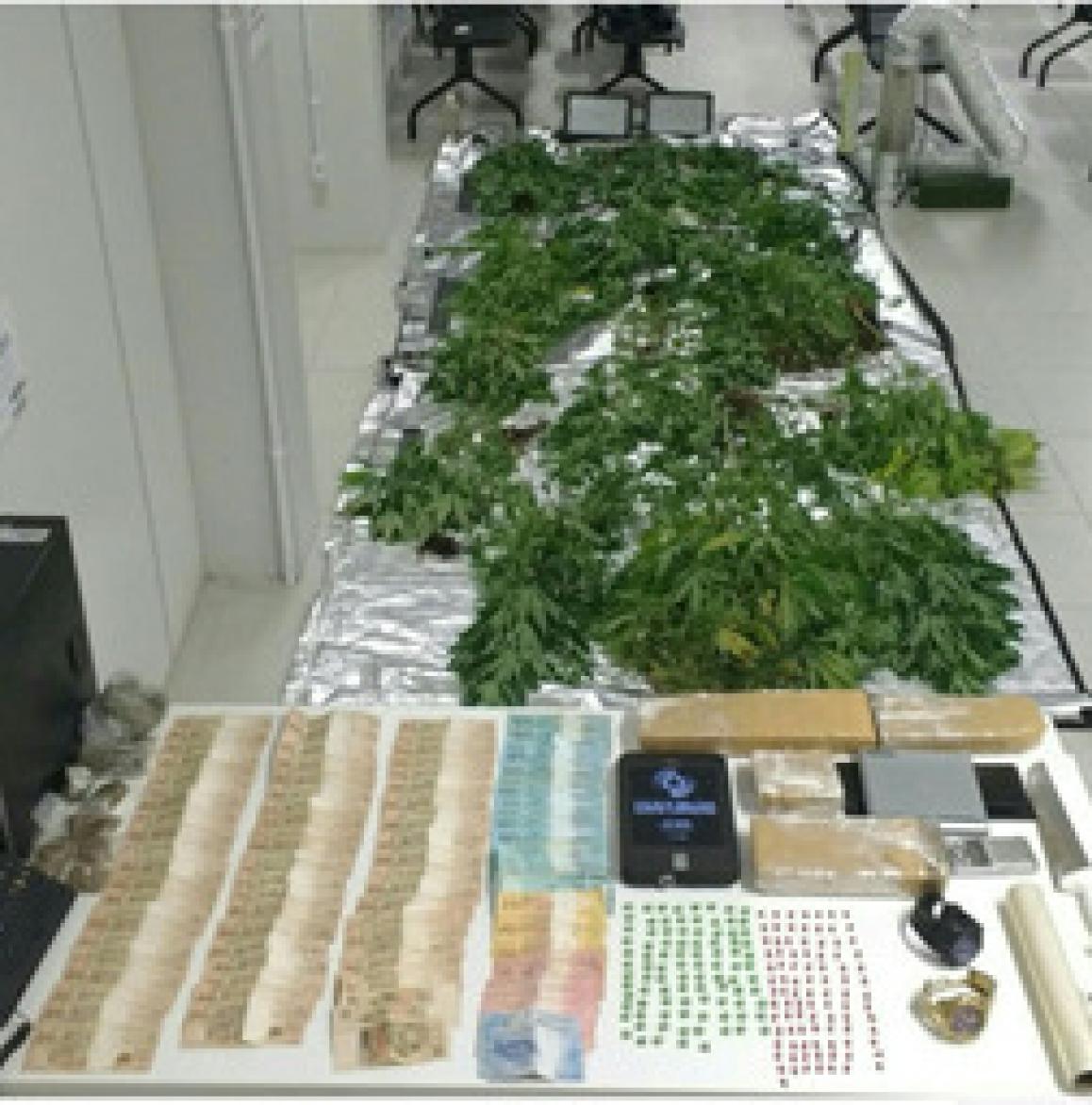 Homem cultivava 65 pés de maconha em um apartamento no Rio Vermelho - Polícia Militar/Divulgação/ND
