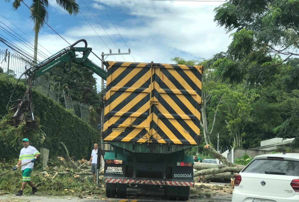 Na Avenida do Antão, no Morro da Cruz, em Florianópolis, equipes fazem a remoção de uma árvore que caiu na via - Bruno Benetti/ND