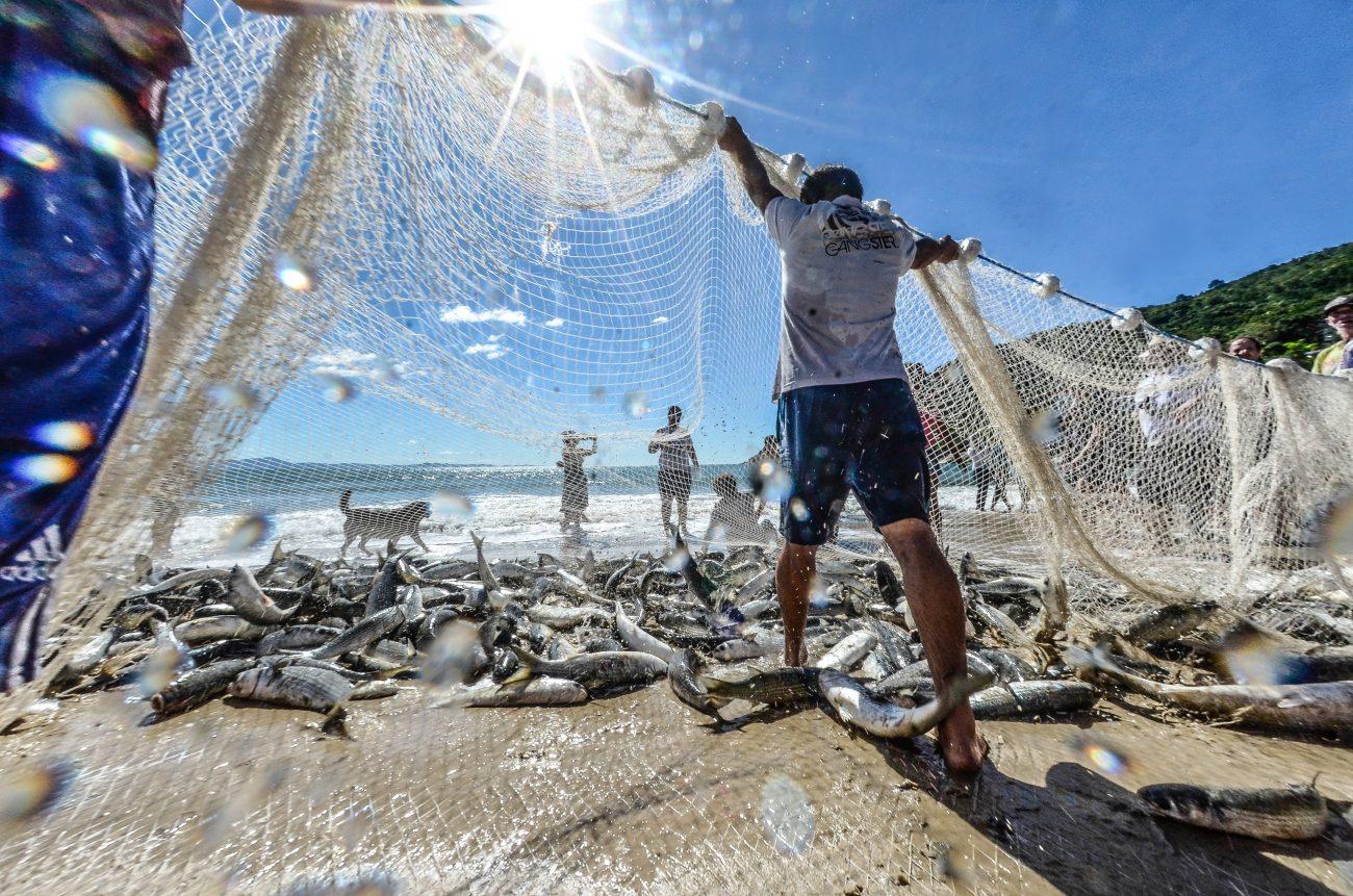 Arrasto de praia é modalidade mais antiga da captura da tainha no litoral catarinense - Joyce Reinert/ND