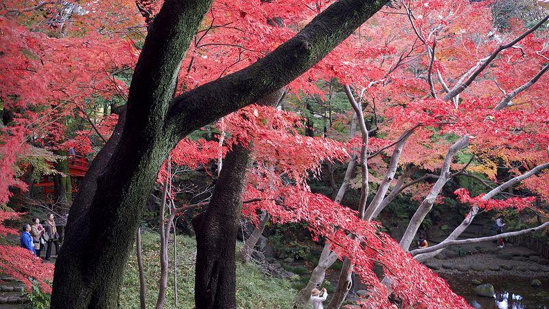 O Koishikawa Korakuen é um deleite natural no meio da urbana Tóquio, no Japão - randomwire via Visualhunt / CC BY-NC-SA - randomwire via Visualhunt / CC BY-NC-SA/Rota de Férias/ND