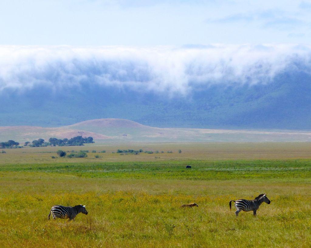 Parque Serengeti, Tanzânia - Pixabay - Pixabay/Rota de Férias/ND