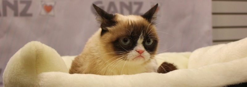 Morre Grumpy Cat, a gata rabugenta mais famosa da internet - Photo credit: insidethemagic on VisualHunt.com / CC BY-NC-ND