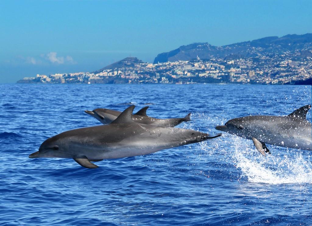 Observação de golfinhos - Visit Madeira - Visit Madeira /Rota de Férias/ND