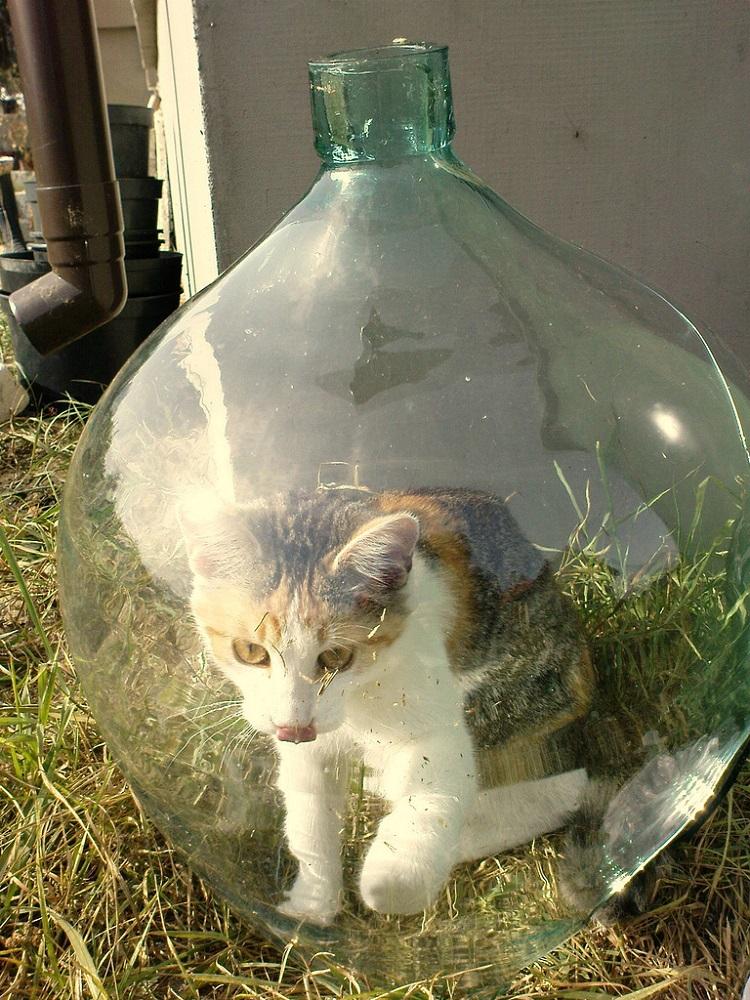 Gatos Bonsai: Em 1999, um e-mail contava a história dos gatos que eram cultivados dentro de garrafas. O boato se espalhou de tal forma que boa parte dos internautas chegou a achar que era verdade. A mensagem dizia que, ao nascer, o animal possui ossos frágeis, por isso pode ser moldado em qualquer formato. Na época, o FBI chegou a investigar o caso a fundo, mas constatou que a história era uma farsa. - Crédito: Reprodução Internet/33Giga/ND