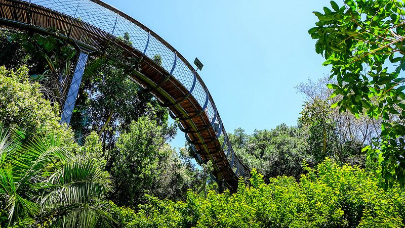 O Kirstenbosch National Botanical fica na Cidade do Cabo, na África do Sul. Lá, é possível obeservar e contemplar a natureza de vários ângulos - ser_is_snarkish via Visual hunt / CC BY-NC-ND - ser_is_snarkish via Visual hunt / CC BY-NC-ND/Rota de Férias/ND