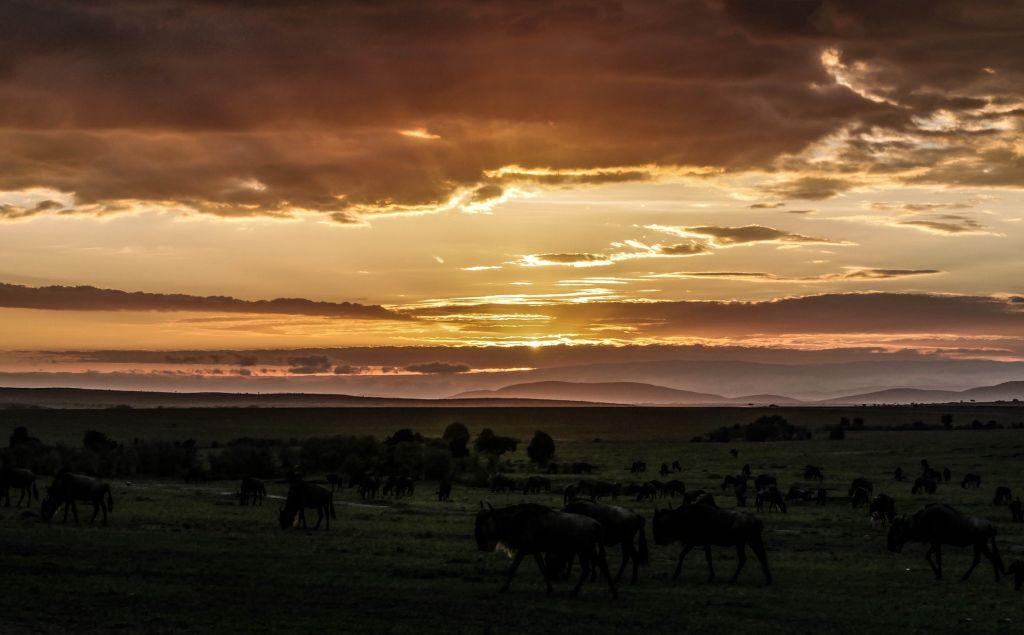Masai Mara, Quênia - Pixabay - Pixabay/Rota de Férias/ND